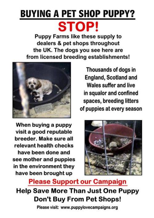 puppy farm poster